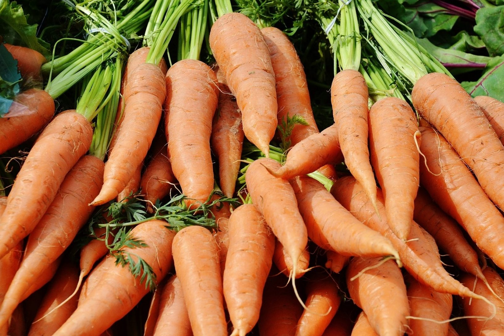 Carrots late crops