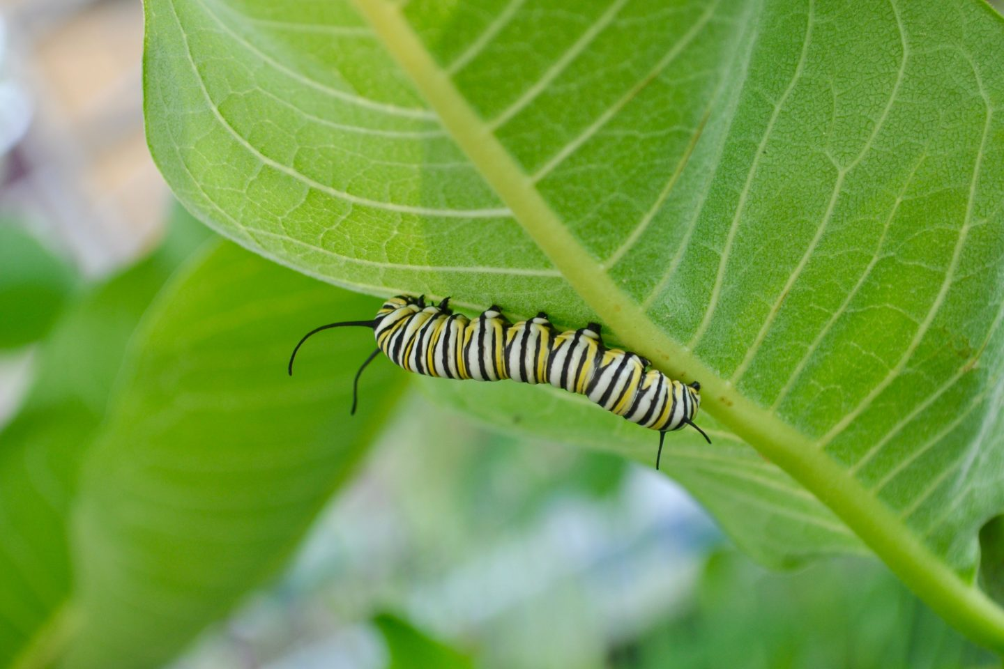 Caterpillar deterring pests
