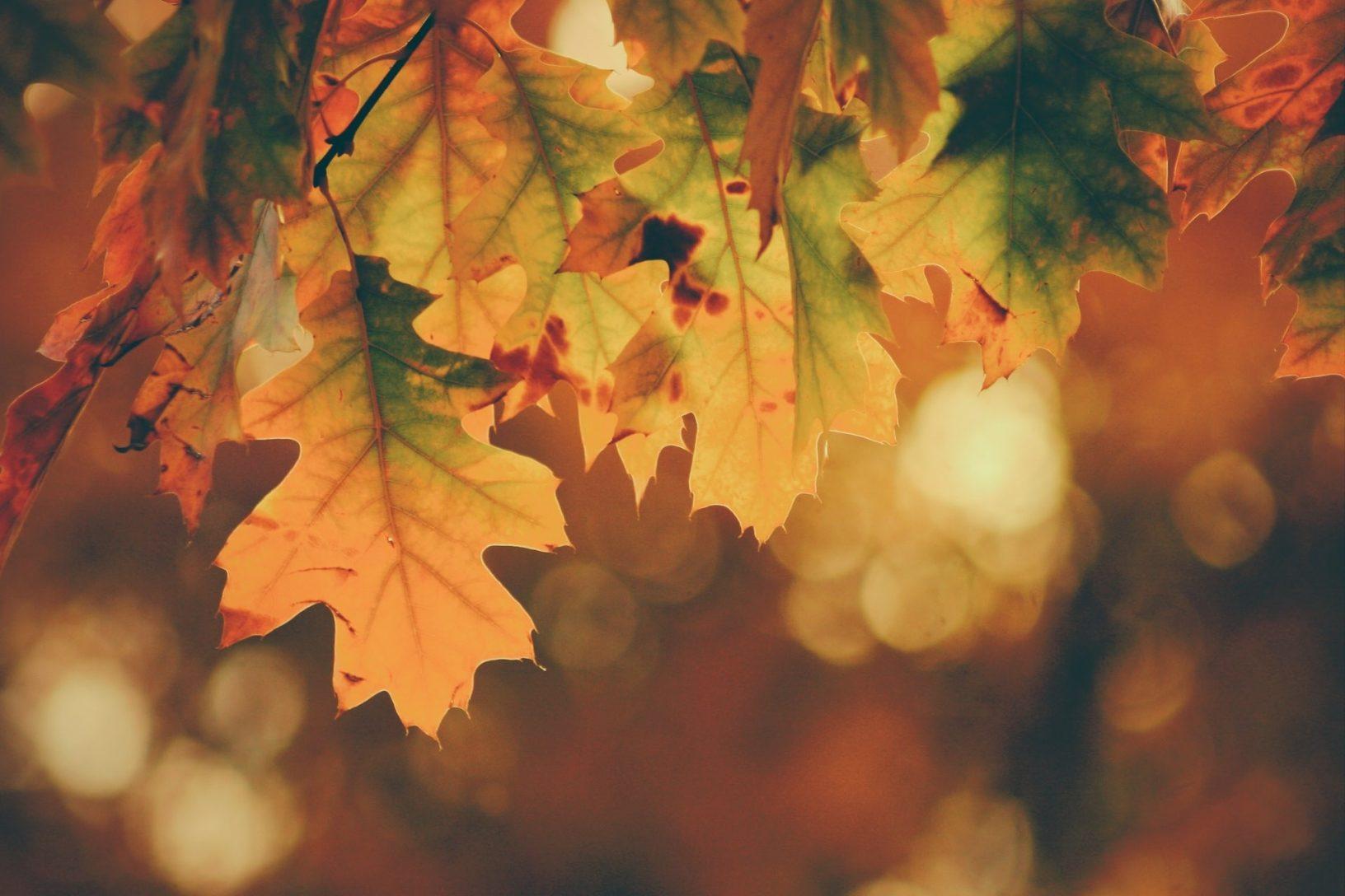 Autumn wellbeing calendar activities