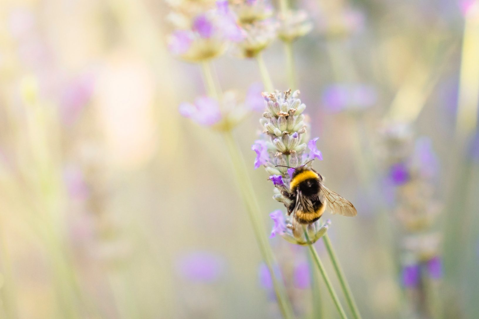 Create wildlife garden