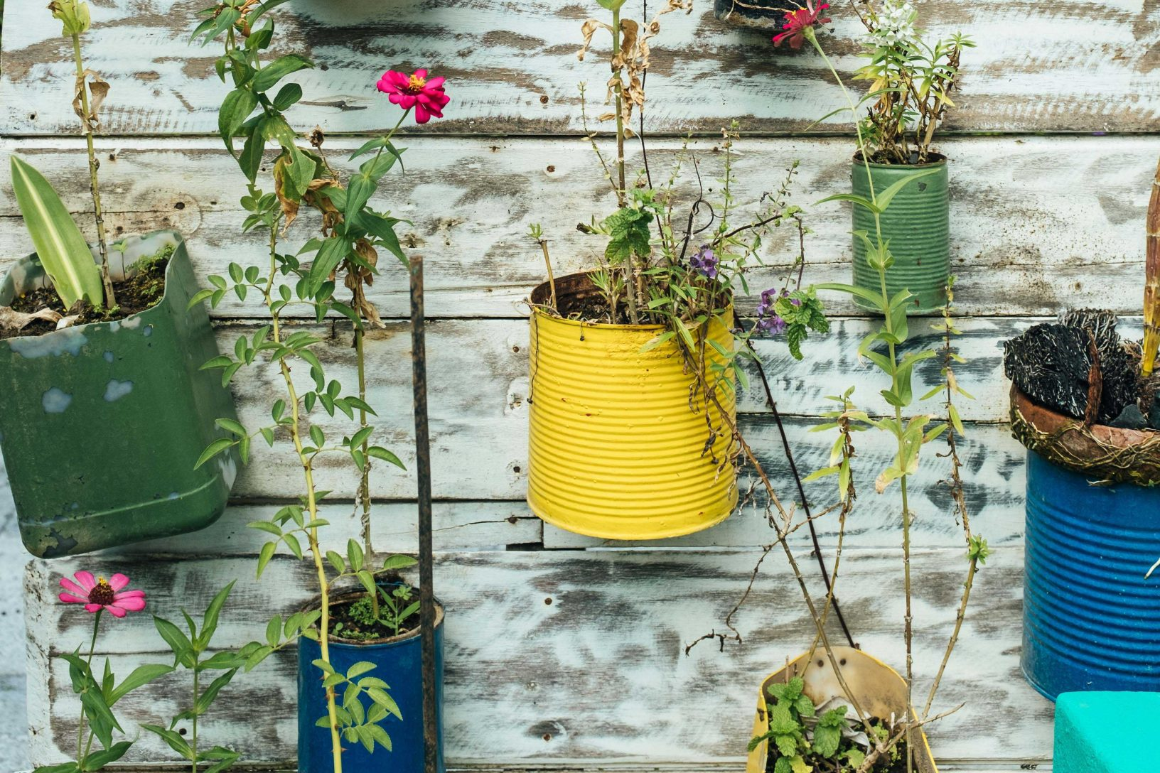 Recycling and gardening hacks