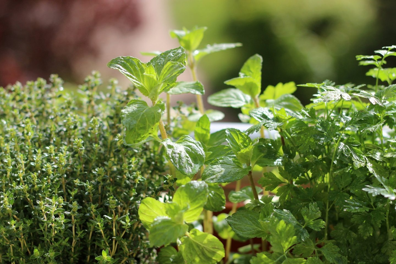 Companion planting herbs