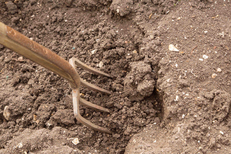 Fork in soil 2