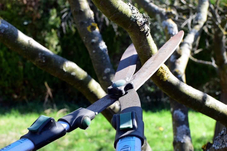 Pruning pic 2