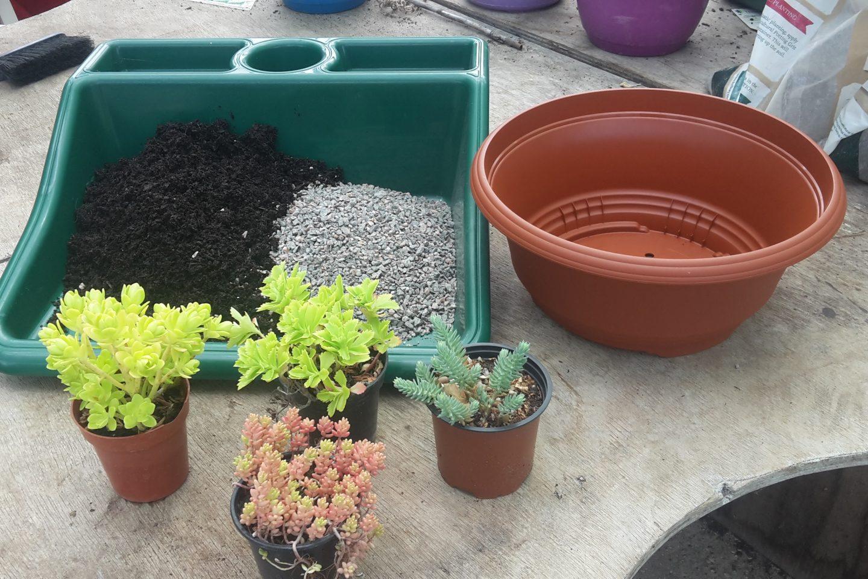Succulent dish garden elements