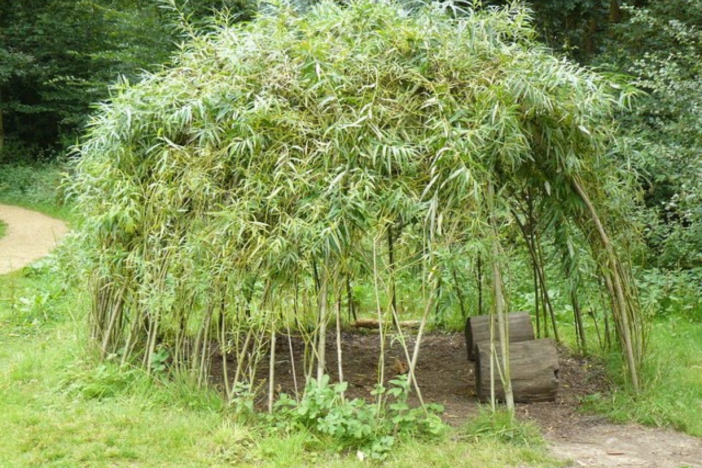 Willow structure 6