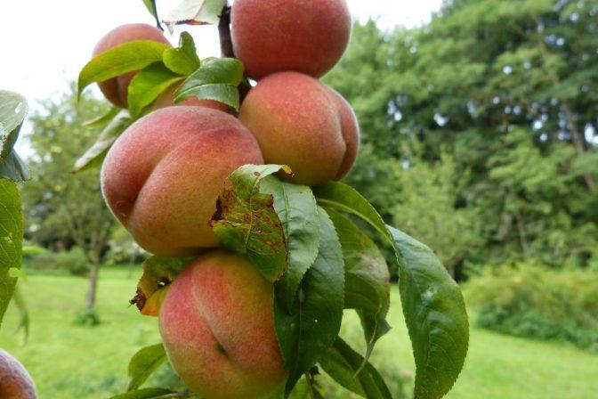 Fruit garden 3