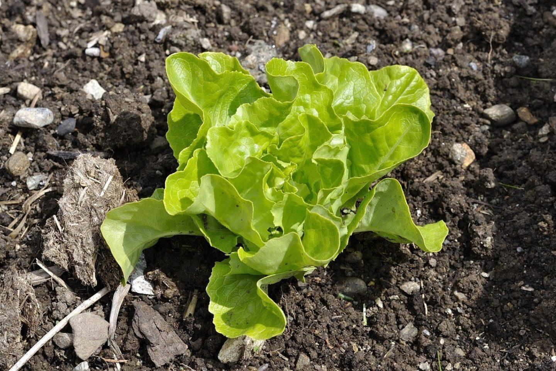 Salad 788505 960 720