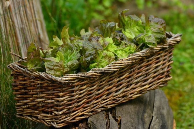 Salad 1516689 960 720