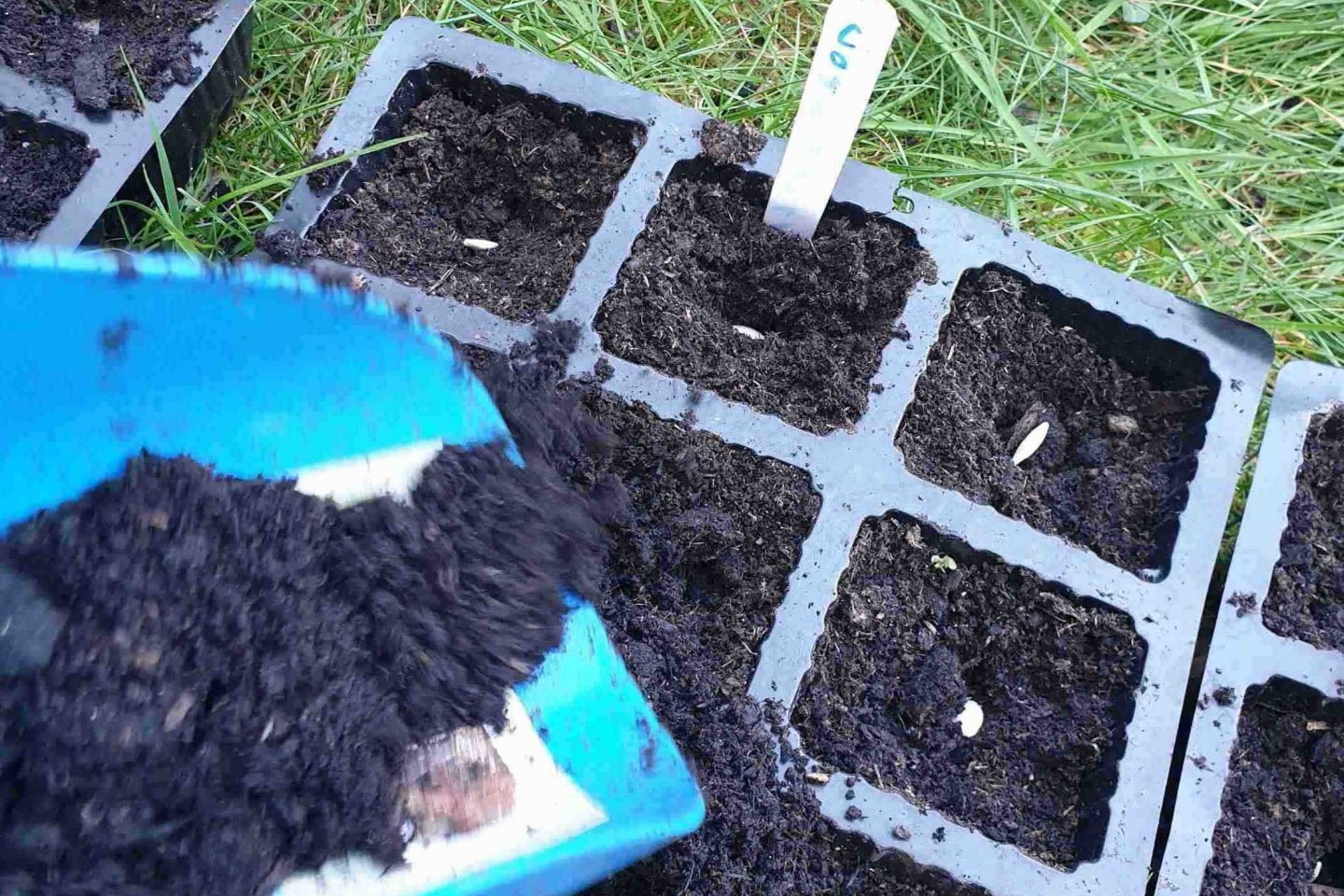 Cover seeds with compost 1