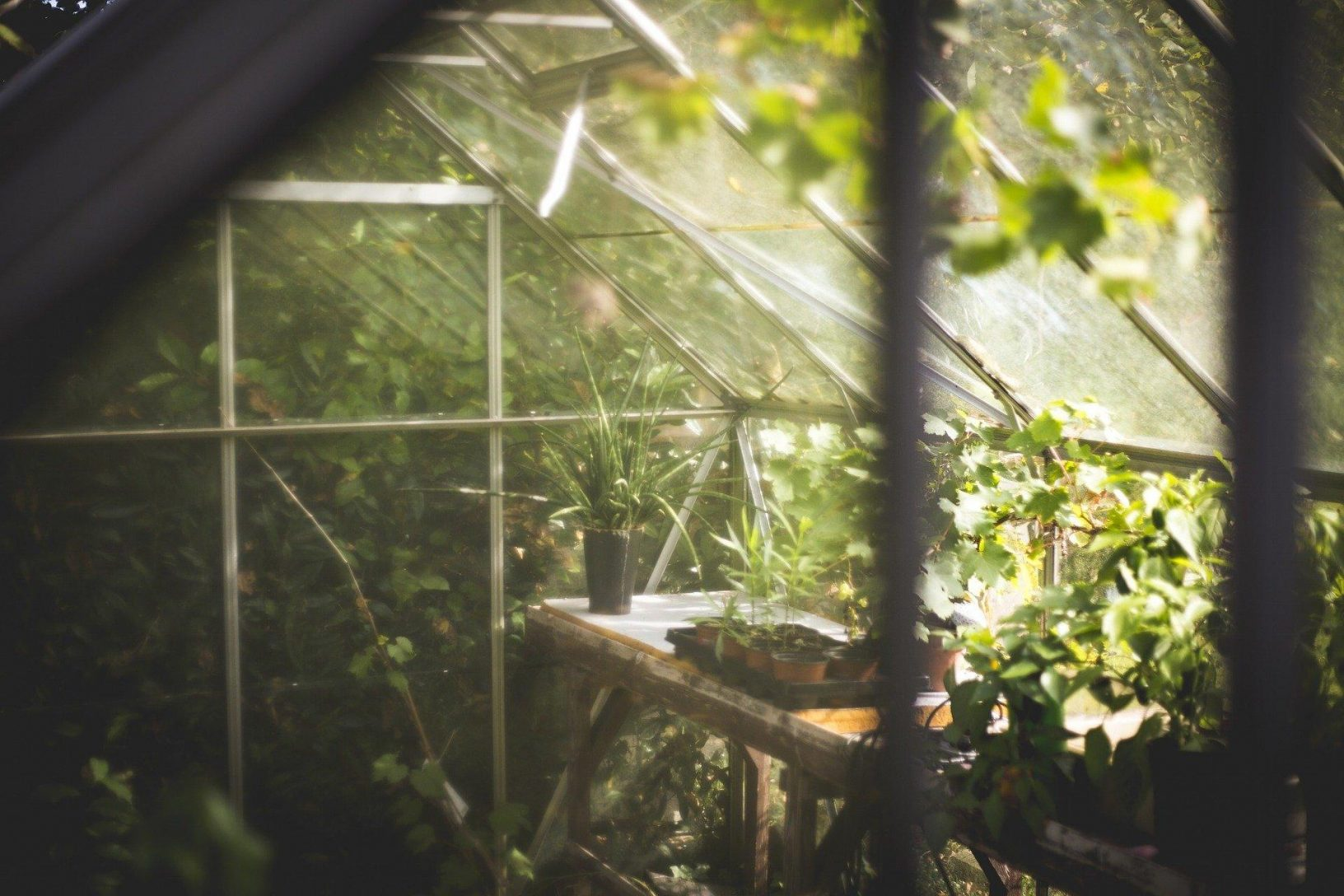 Greenhouse 691704 1920