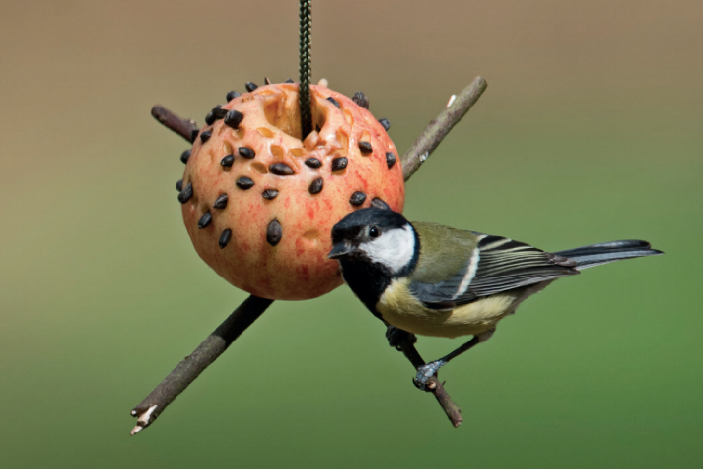 Apple bird feeder