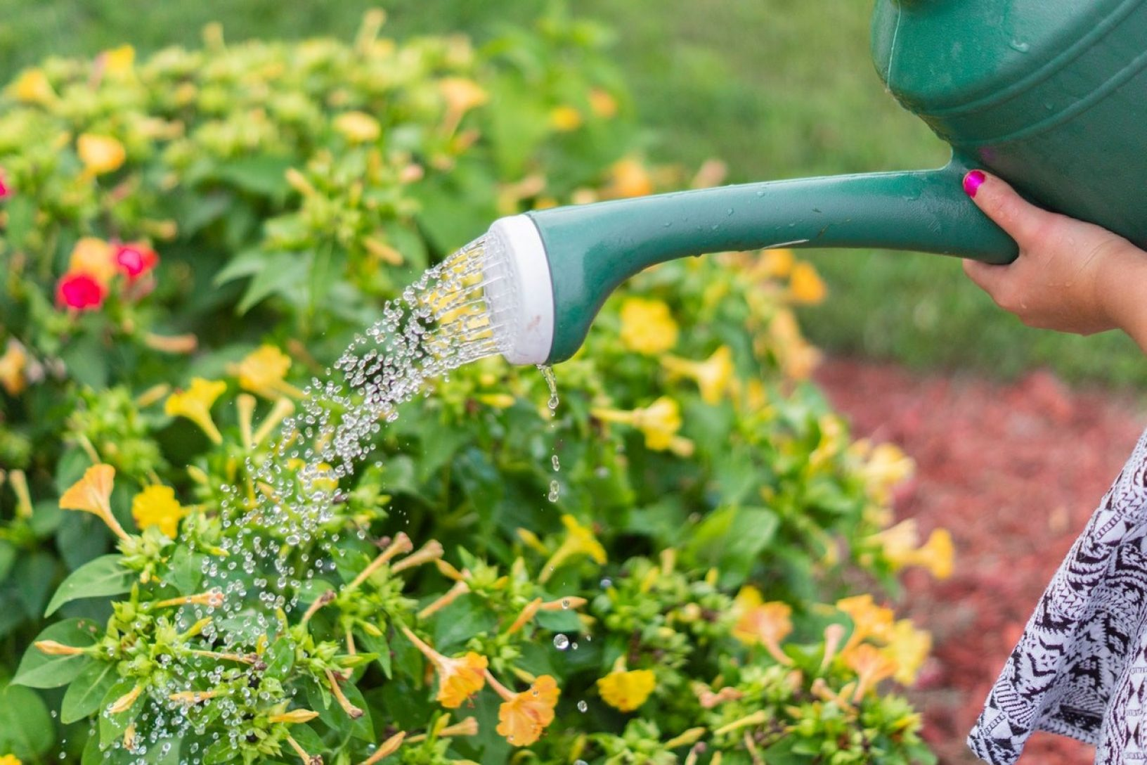 Watering can supporting your garden to grow well