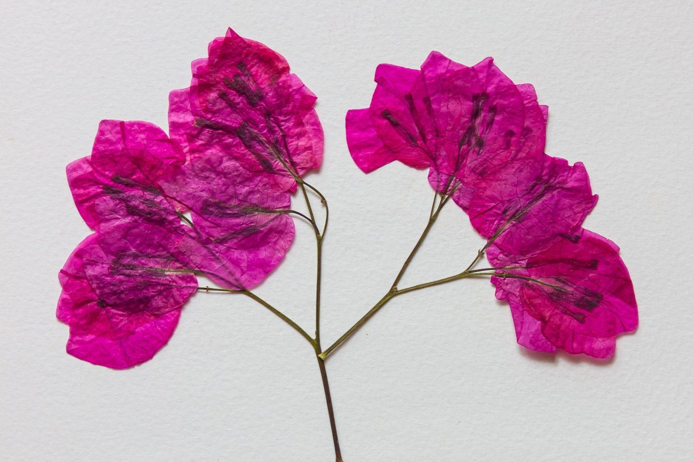 Pressed flowers 2 200826 151644