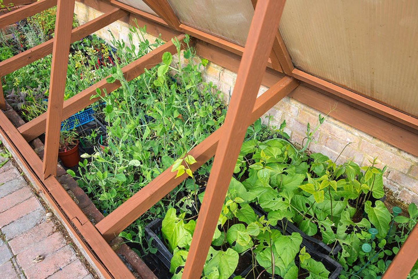 Trunkwell cold frame small