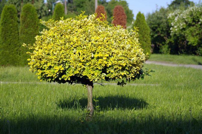 Small tree 2
