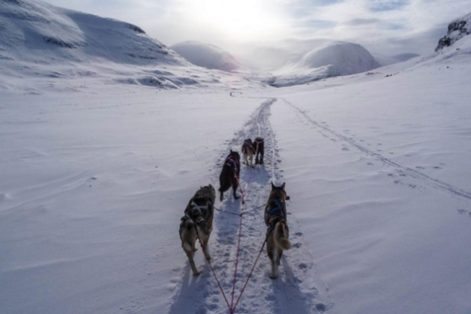 Lapland husky trail