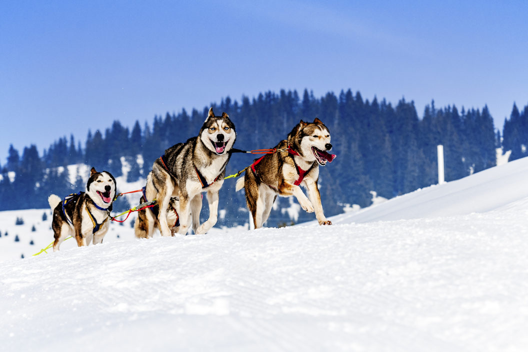 Lapland The Husky Trail 11