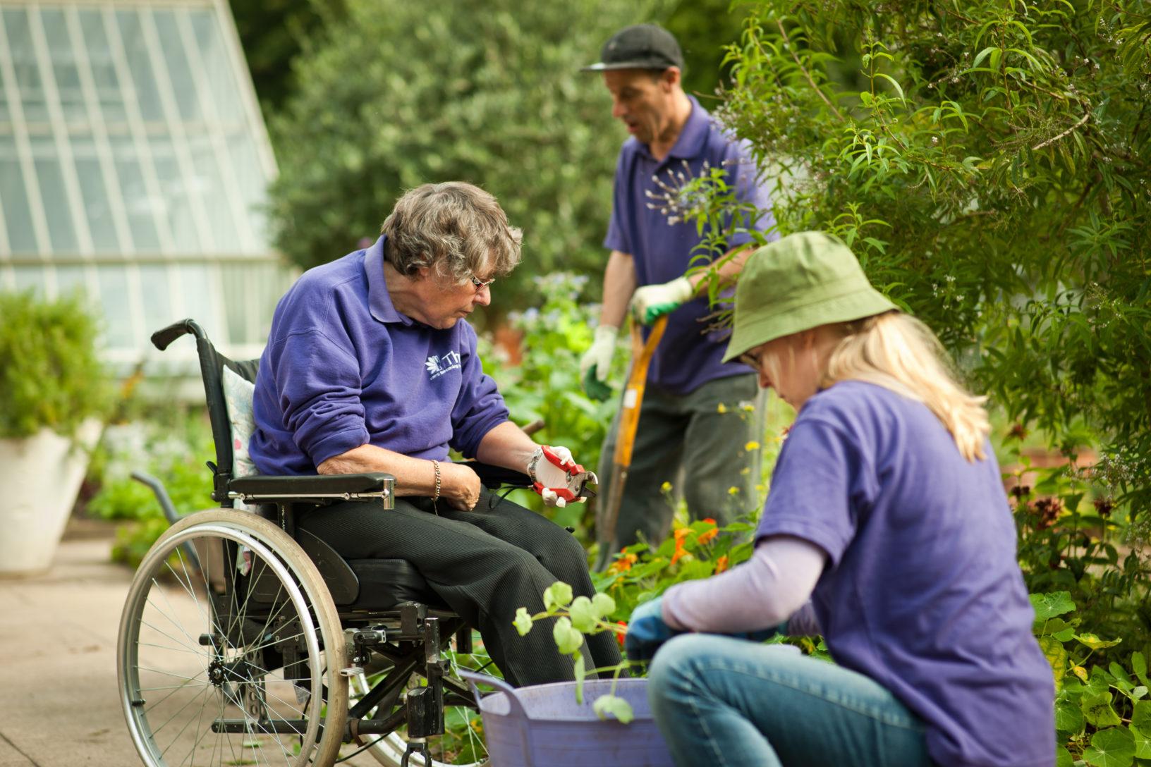 Team working in the garden