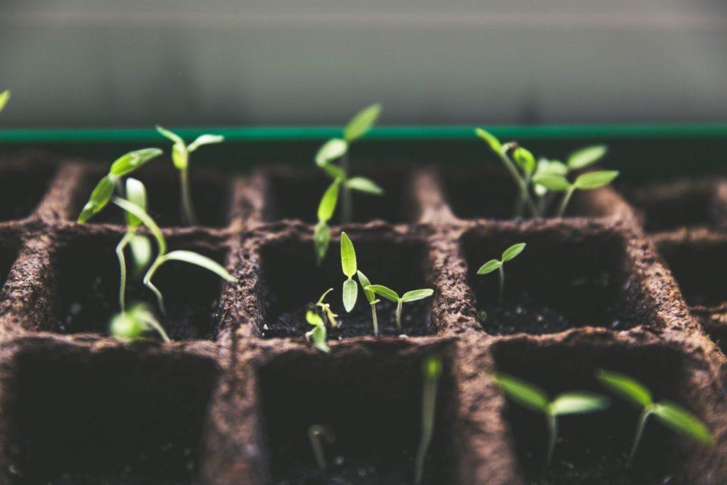 Blog Seeds Growing