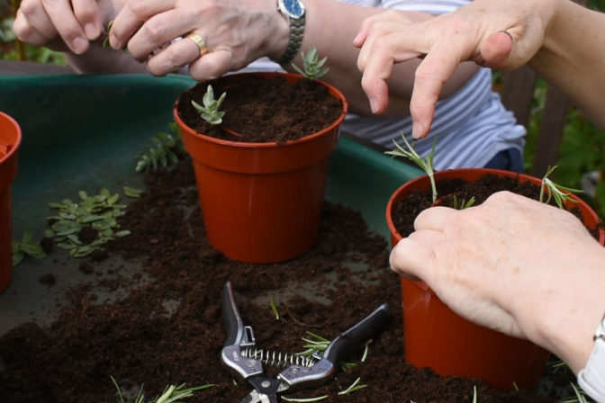 4 hands in potting tidy0001 2
