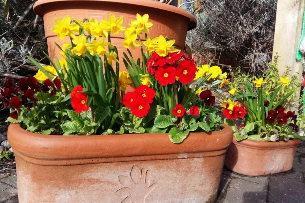 Thrive flowers