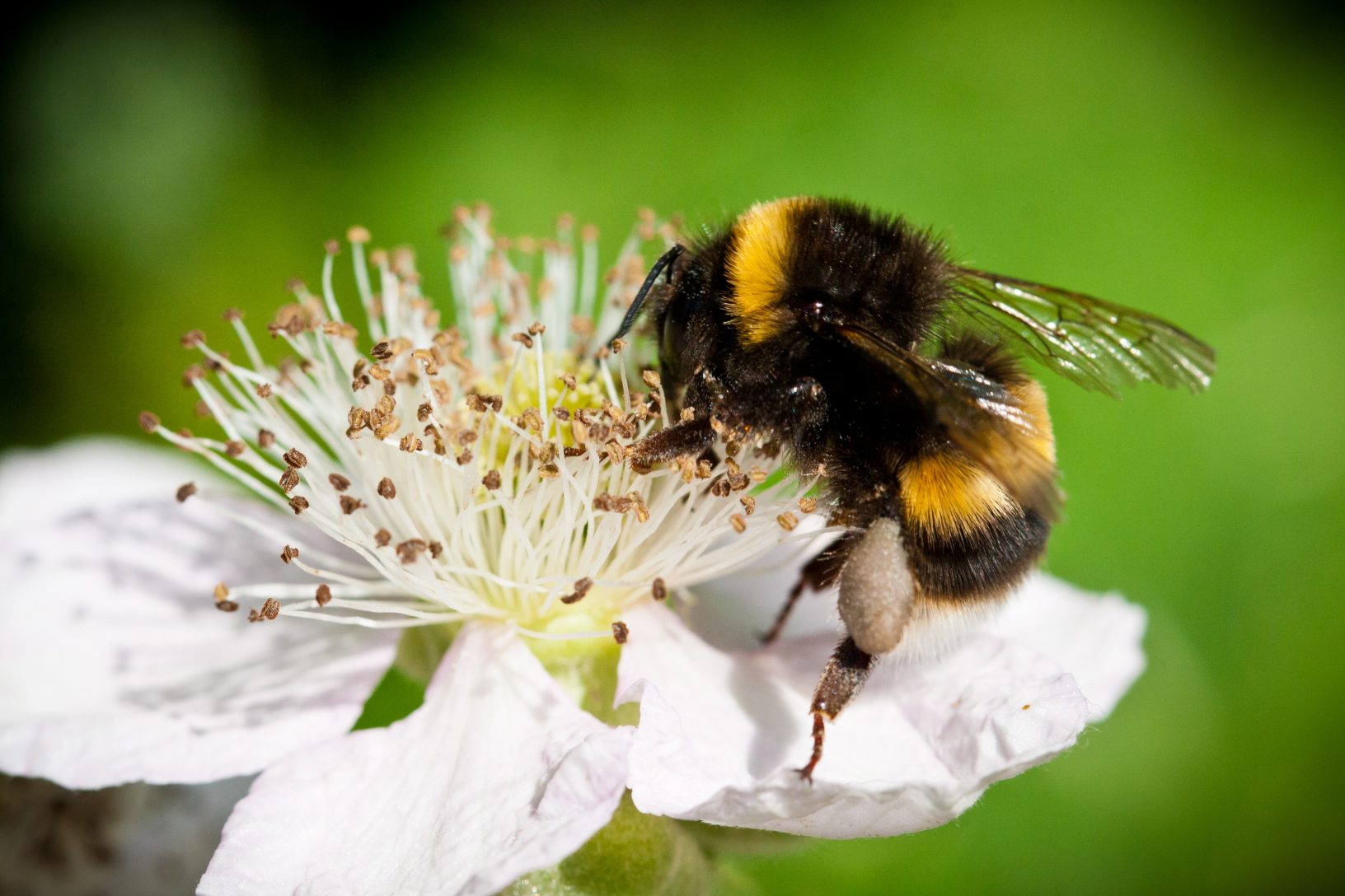 Bee macro Jan B 2