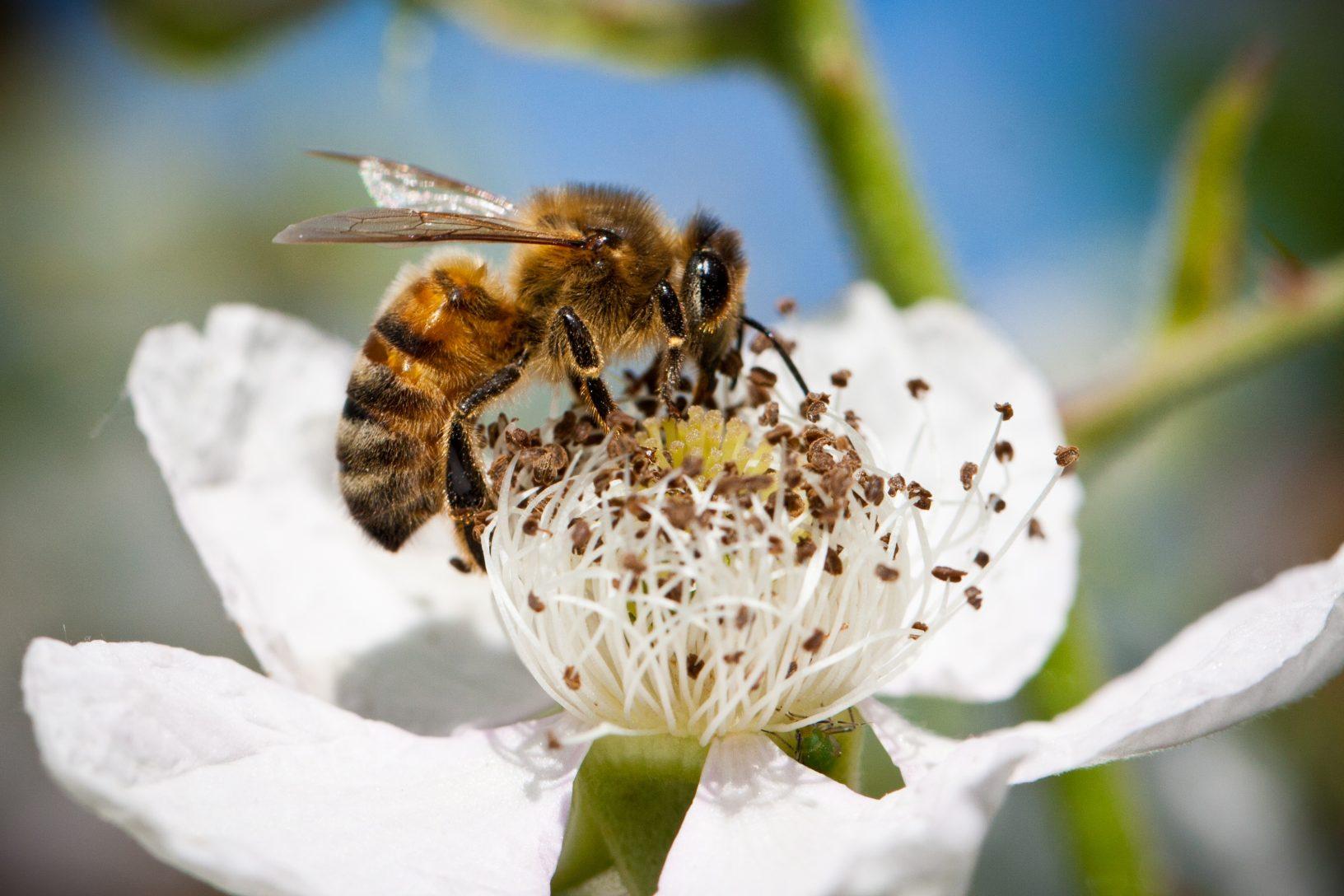 Bee macro Jan B 3