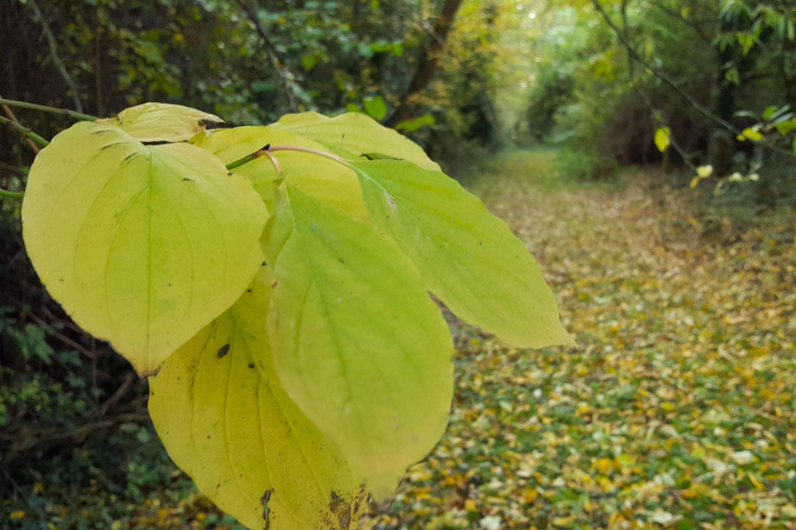 Fallen leaves 1 of 1