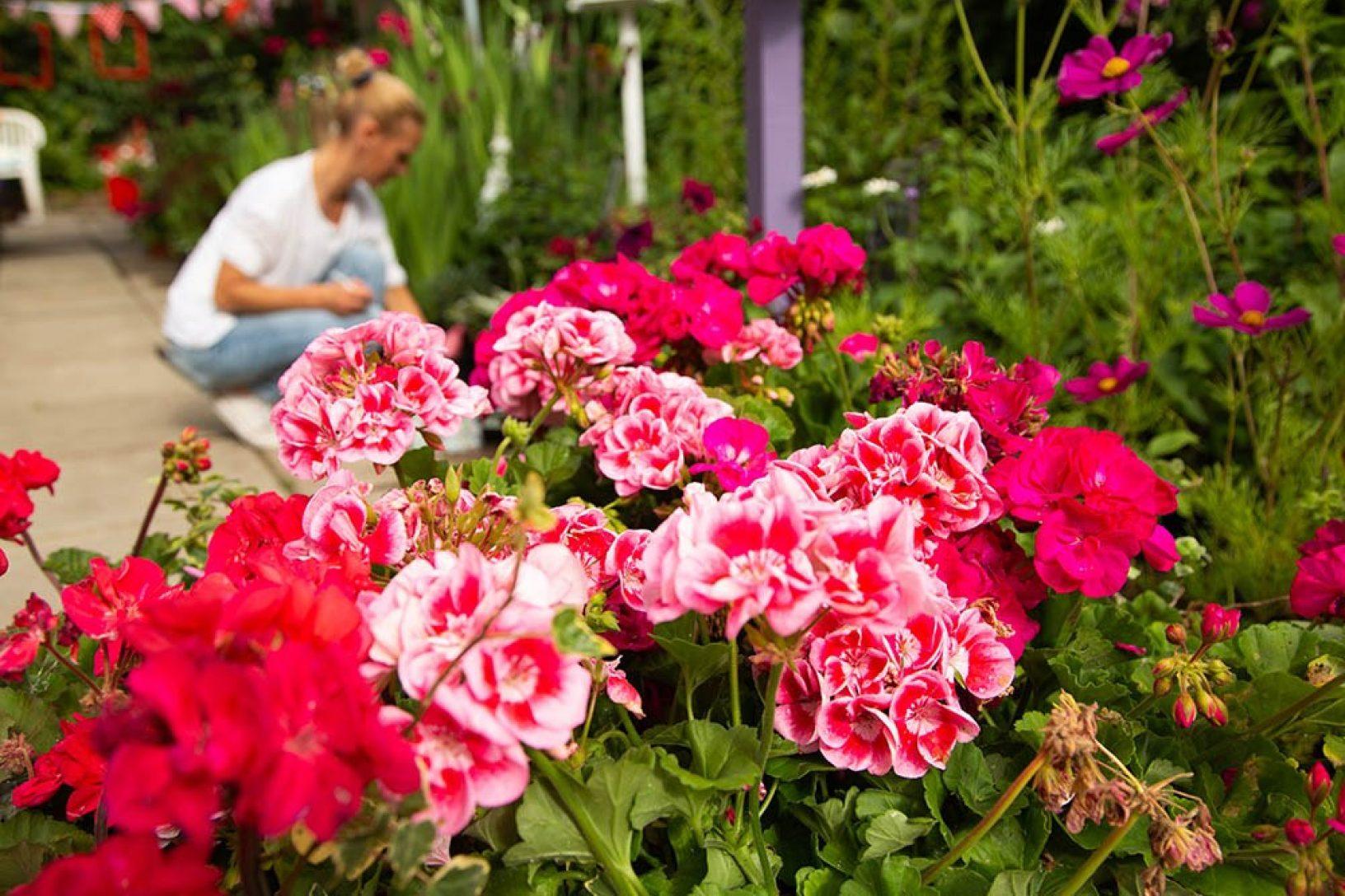 Plant sale 3 social