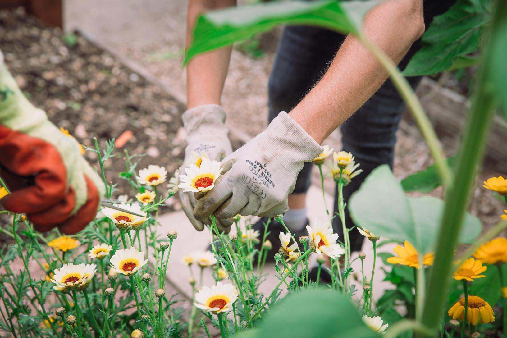 Tending flowers 1 of 1