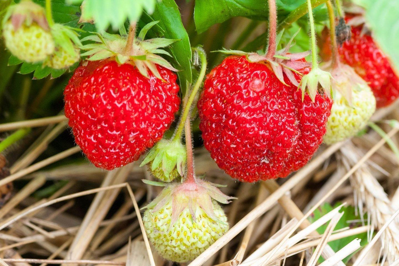 Fruit 3269791 1280