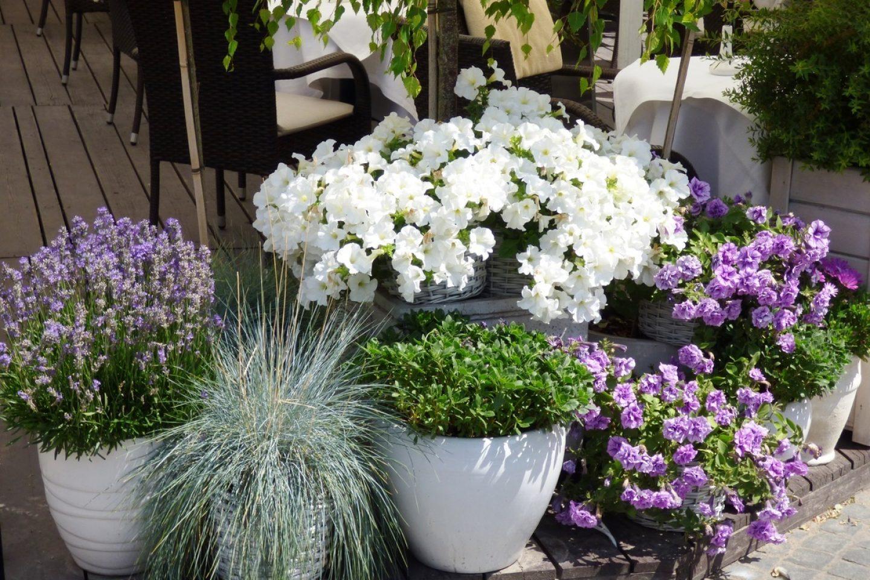 Nature plant flower pot backyard garden 668252 pxhere com
