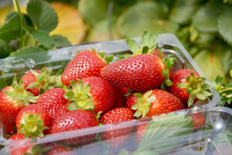 Strawberries 5696336 1280