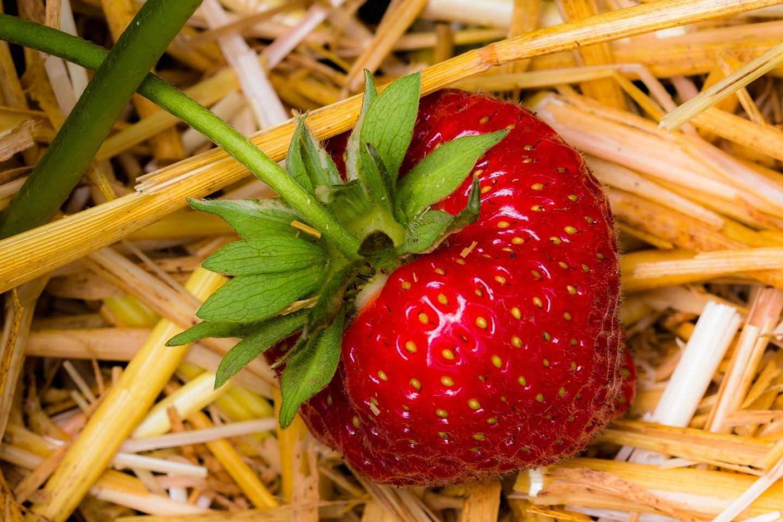 Strawberry 1459564 1280