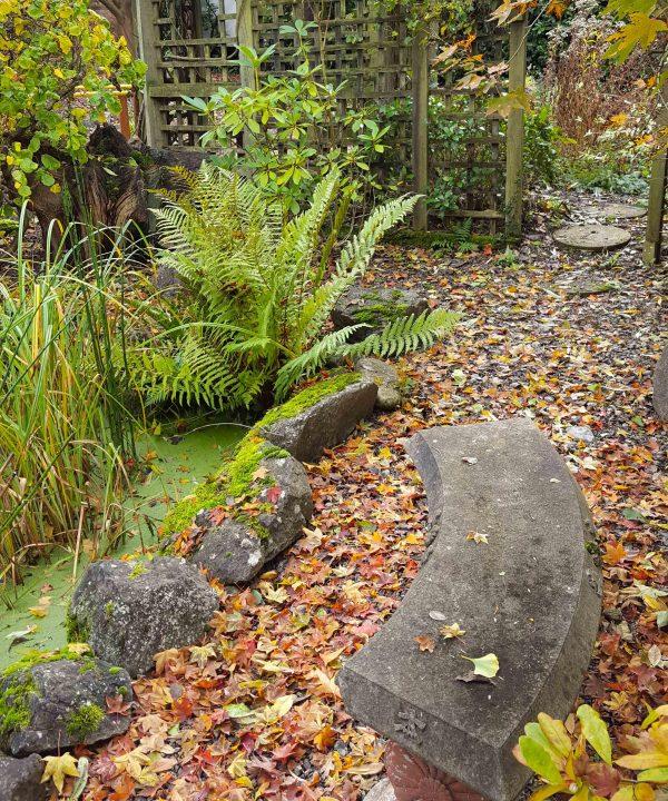 Fallen leaves 2 of 2