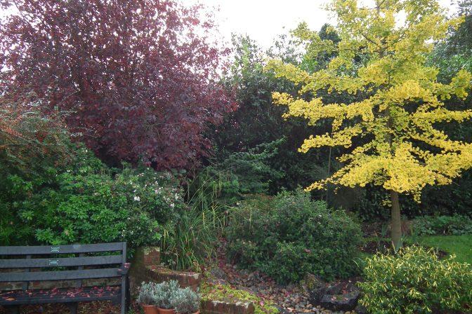 Trunkwell autumn