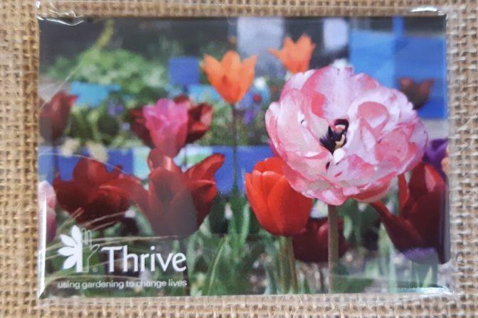 Tulip Magnets
