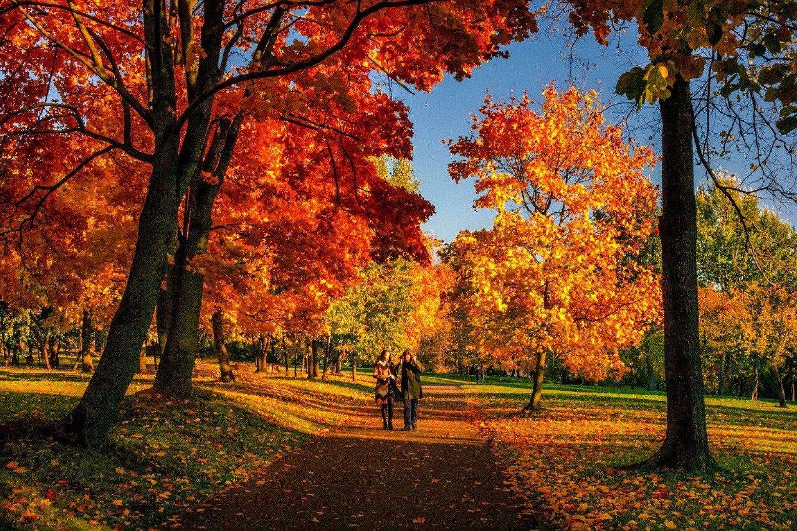 Autumn wellbeing calendar
