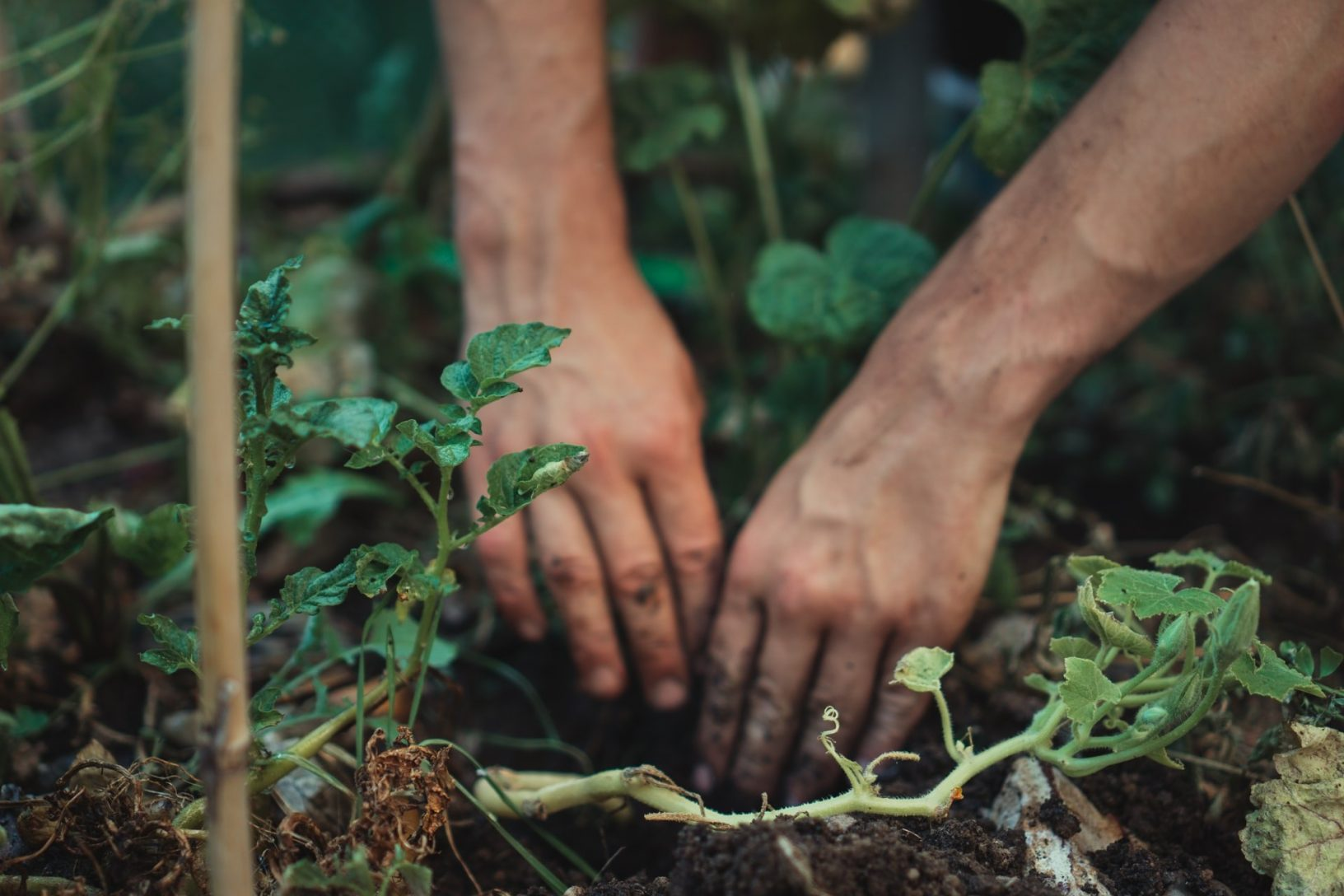 Gardening as an occupation planting