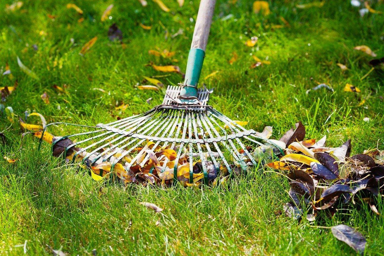 Autumn lawn care garden rake