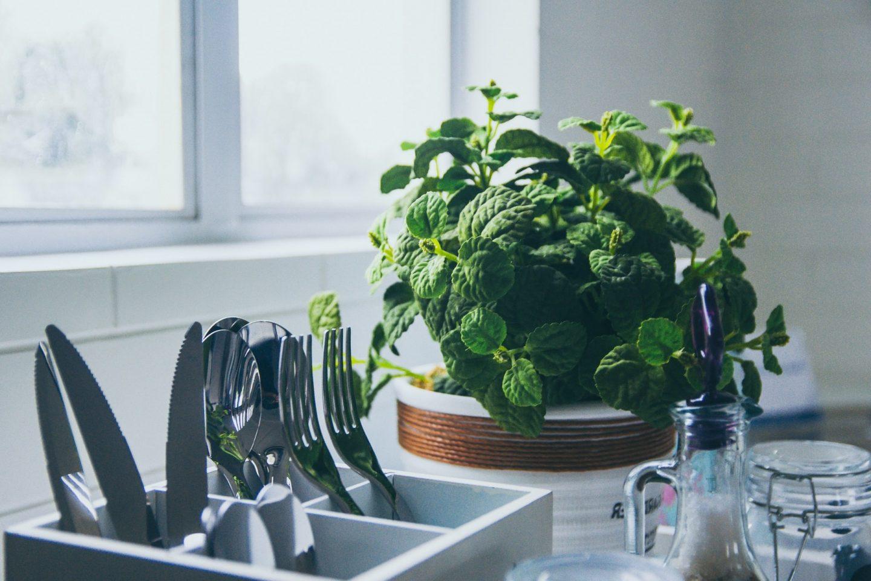 Indoor herb garden mint