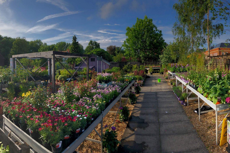 Plant panorama