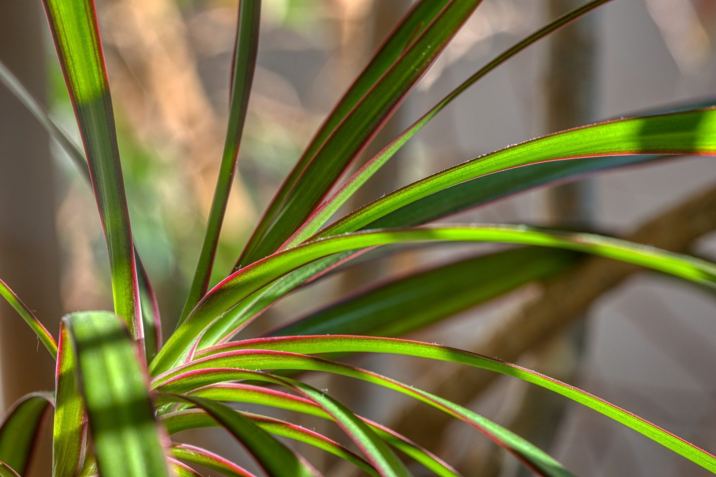 Plants to ease the mind dracena