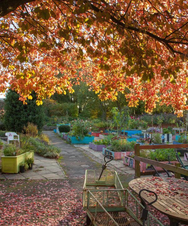Autumn at the Trunkwell Gardens October