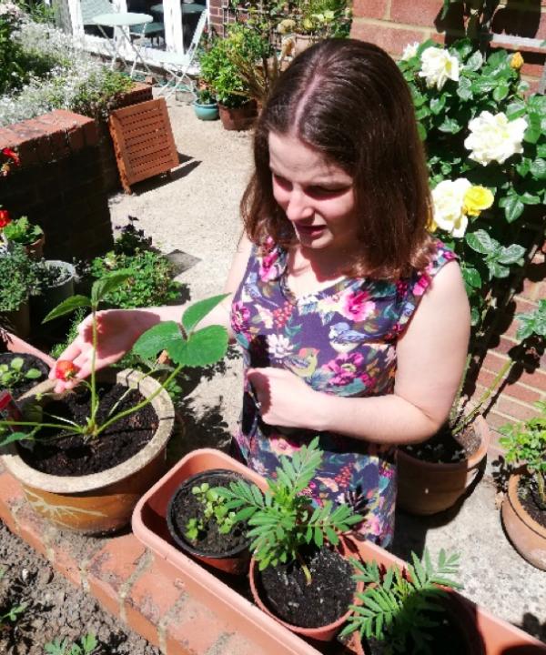 Katy T seedlings