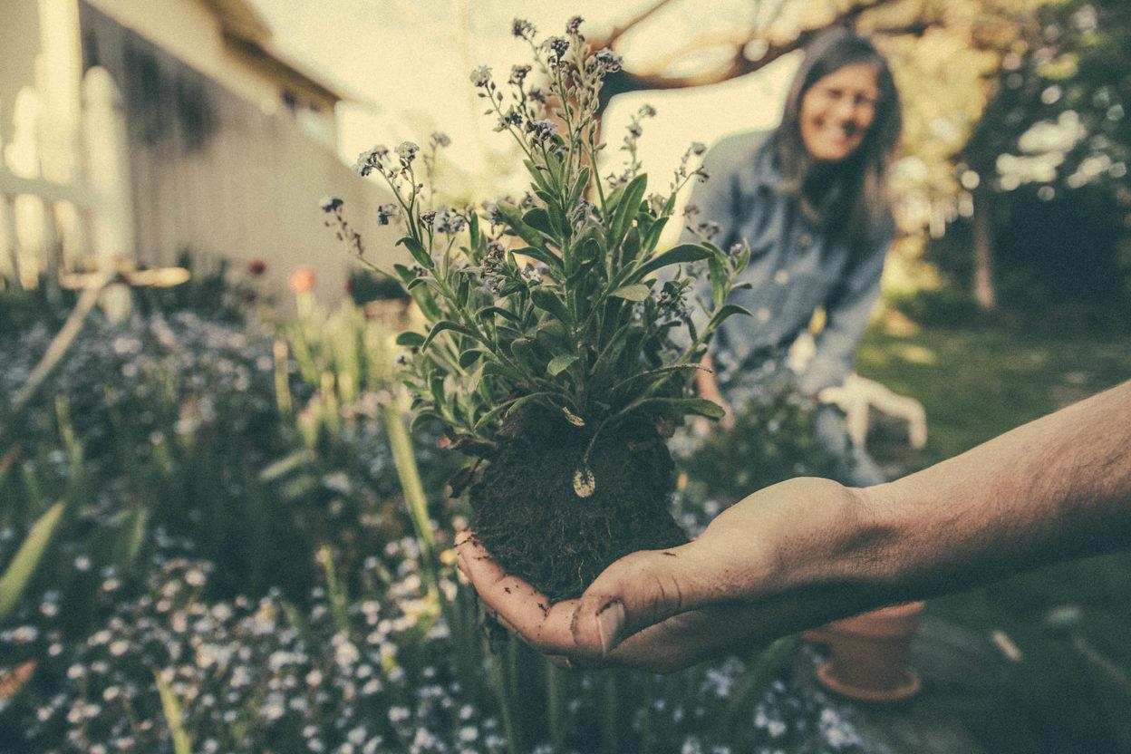 Benjamin combs gardening mental wellbeing