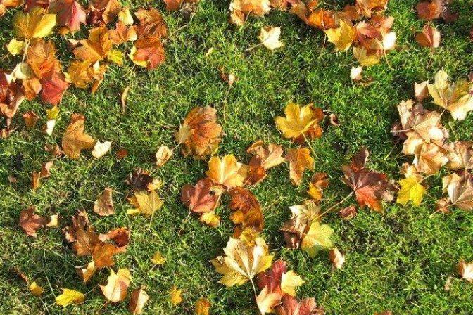 Autumn lawn care 3