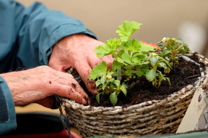 Gardening pic